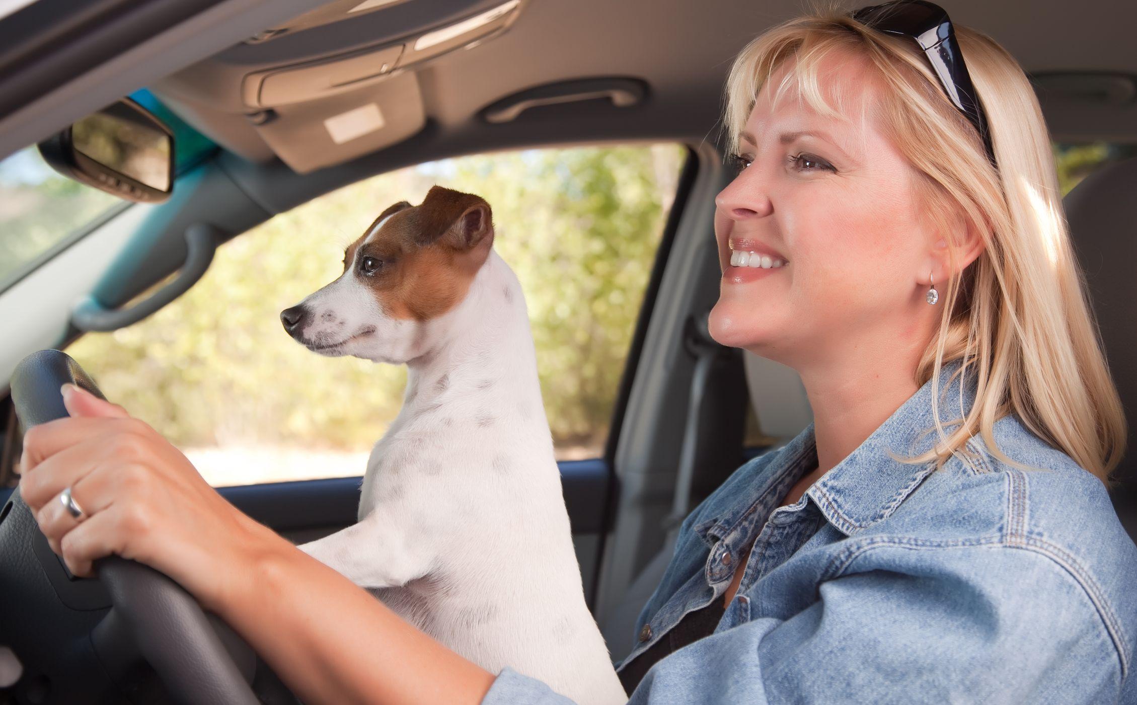 iCube car air purifiers